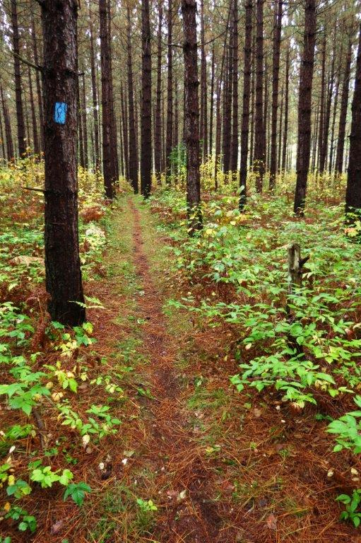 North Country Trail.jpg